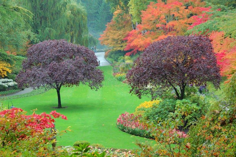 butchart uprawia ogródek drzewa zdjęcia royalty free