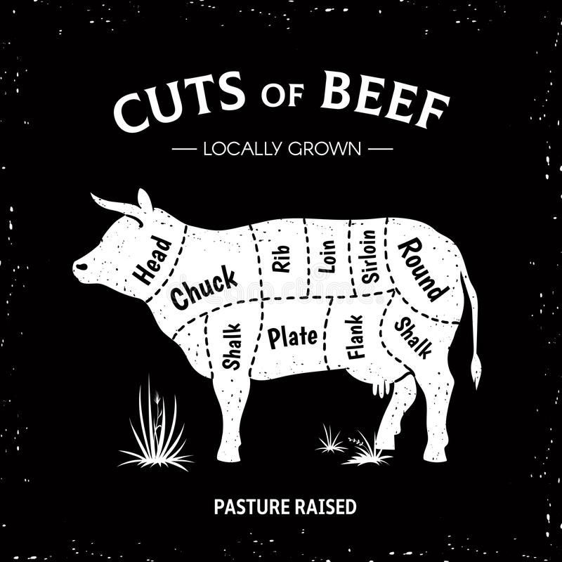 Butcher cow poster. White beef diagram, cow silhouette vintage logo, restaurant menu beef cut template. Vector butcher royalty free illustration