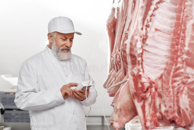 Butcher holding device and testing fresh pork carcasses. Butcher in white uniform standing near row carcasses, posing. Elderly man, worker of factory holding stock photography