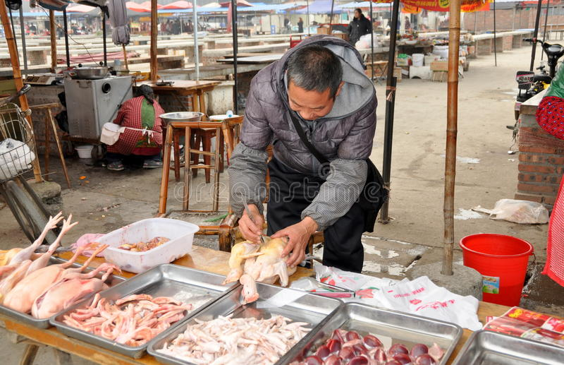 Butcher Plucking Feathers from Chicken
