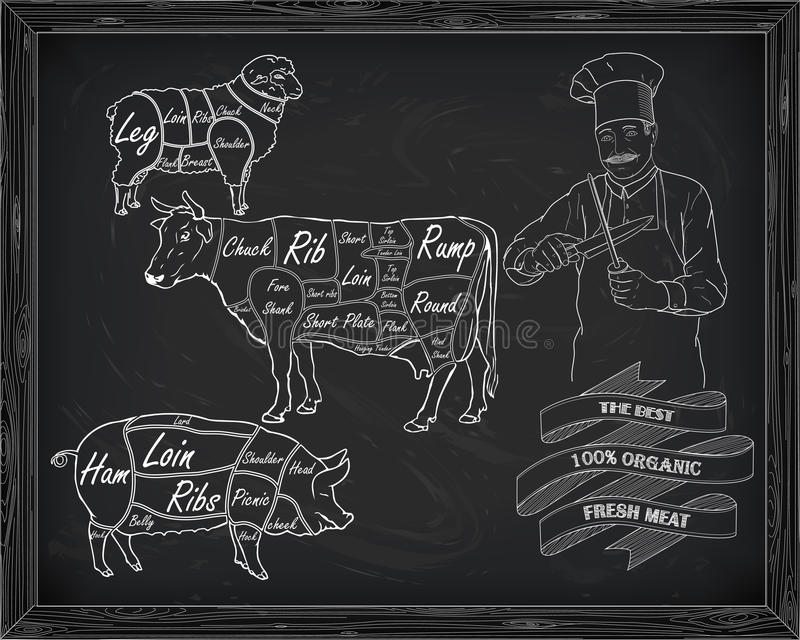 Butchering beef diagram, pork, lamb and cook. Drawn in chalk vector illustration