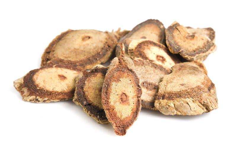 Butea superba Roxb or red Kwao Krua tuber root isolated on white. Butea superba Roxb Also named as red Kwao Krua, Leguminosae Butea superba or simply Butea tuber stock images