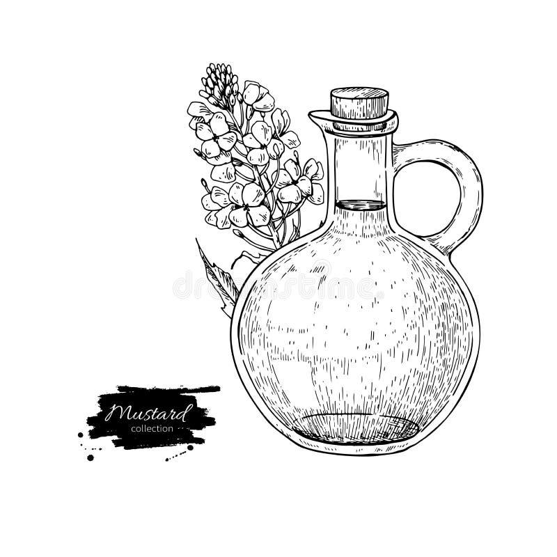 Butelka musztarda olej z rośliną Wektorowa ręka rysująca ilustracja ilustracji