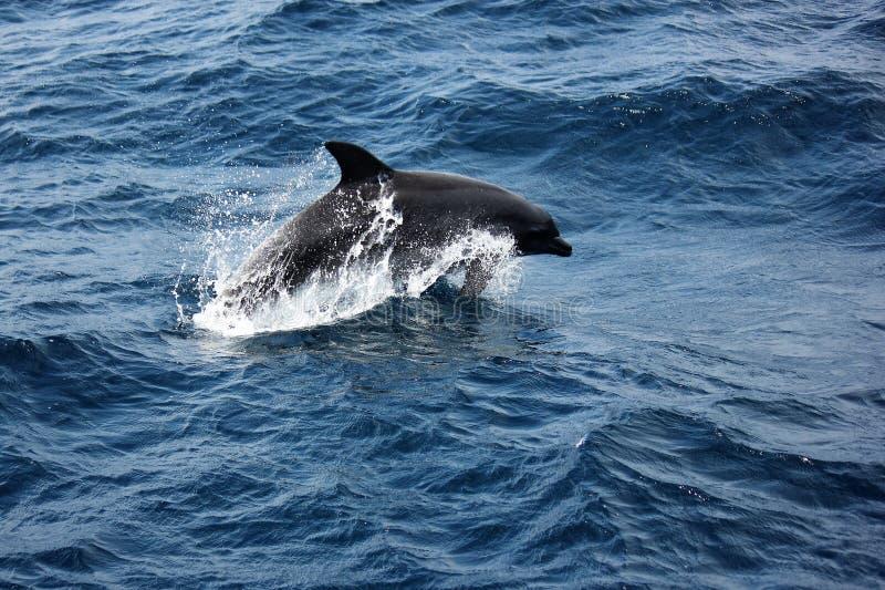 Butelka Ostrożnie wprowadzać delfinu naruszać obrazy stock