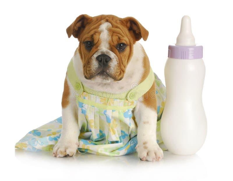 butelka - TARGET915_1_ szczeniaków potomstwa zdjęcie stock