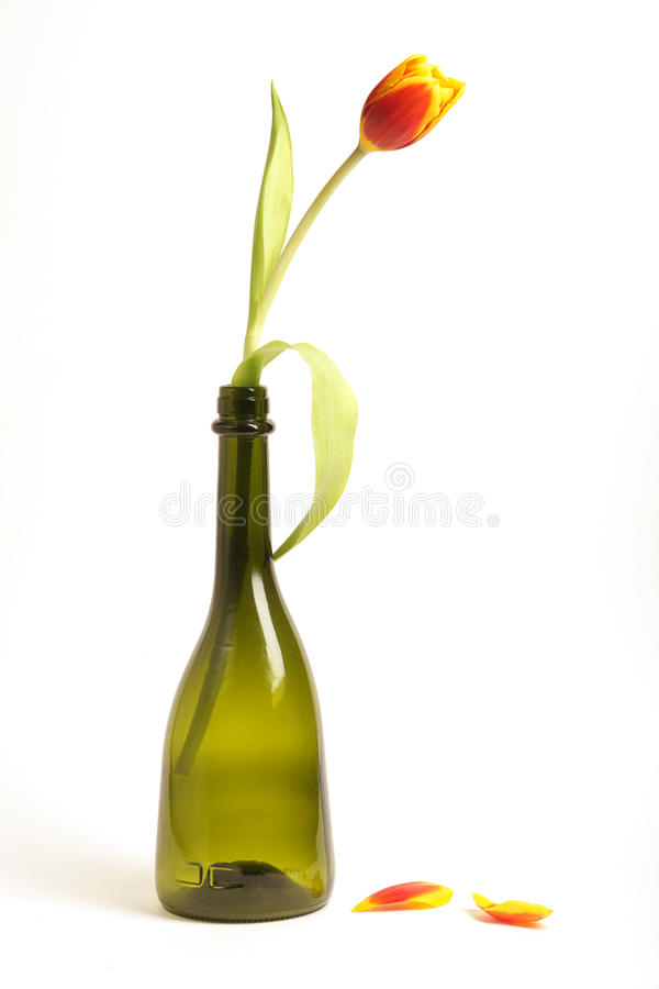 butelka tulipan fotografia royalty free