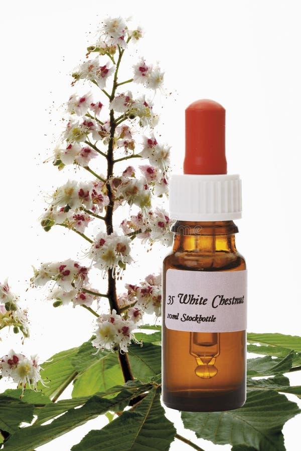 Butelka z Bach kwiatu zapasu remedium, Biały kasztan (Aesculus hippocastanum) zdjęcie stock