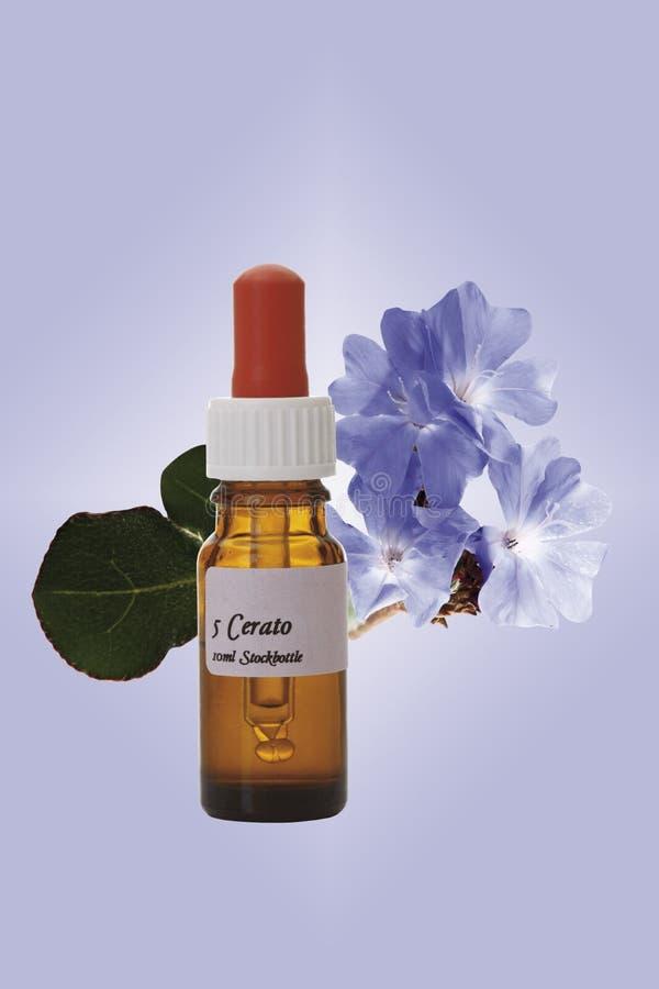 Butelka z Bach kwiatu zapasu remedium, Leadwort (Ceratostigma) fotografia royalty free
