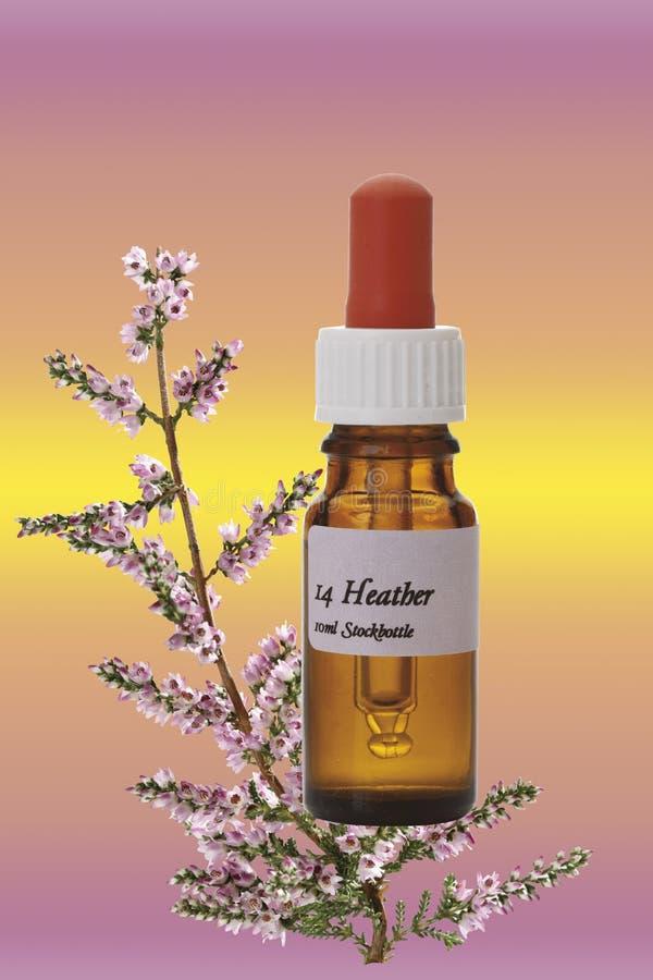 Butelka z Bach kwiatu zapasu remedium, wrzos (Calluna vulgaris) zdjęcia royalty free