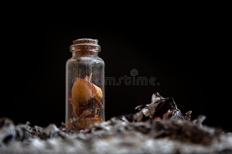 Butelka z kwiatów płatkami Popiół na czarnym tle wspominki obraz royalty free
