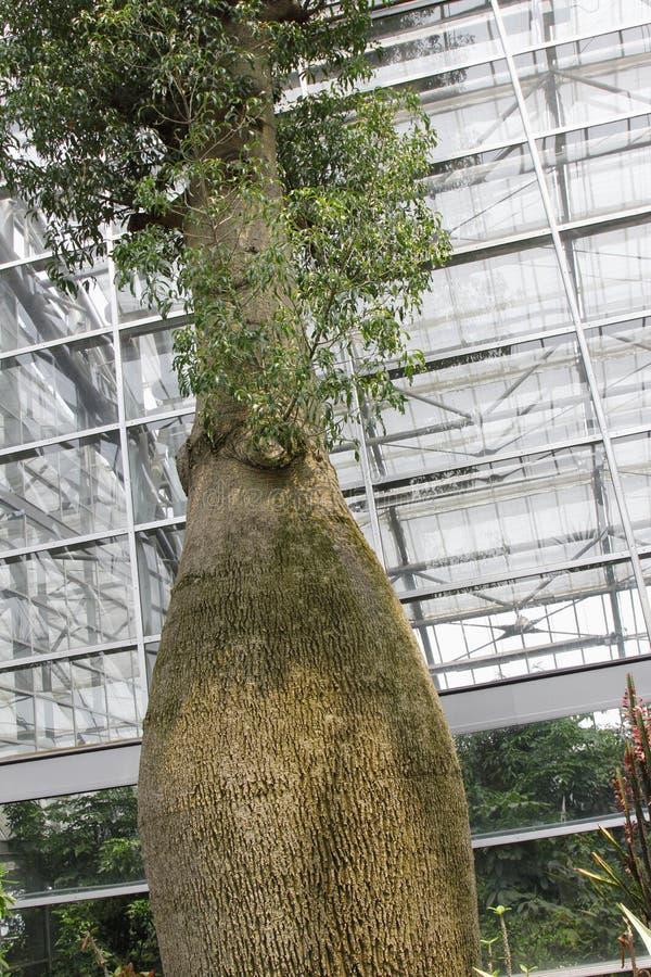 Butelki drzewo obrazy stock