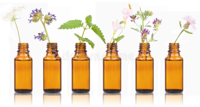 Butelki istotny olej z ziele świętym kwiatem fotografia royalty free