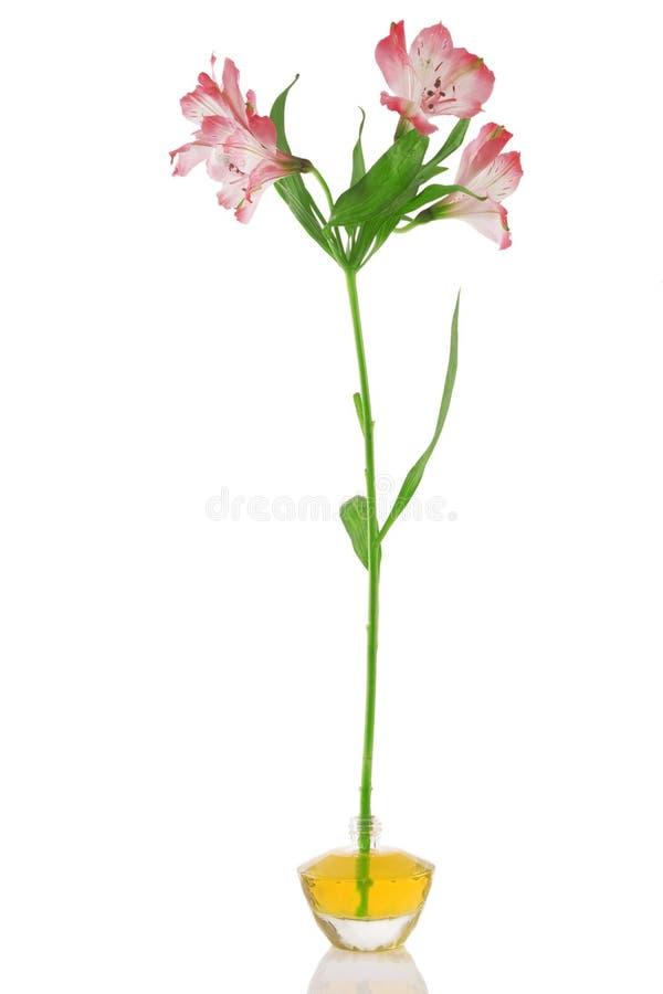 butelki kwiatu pachnidło zdjęcia stock