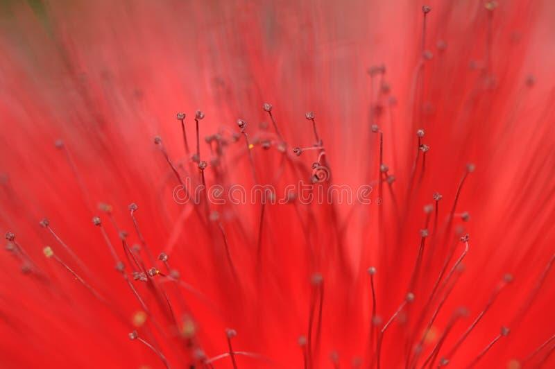 Butelki muśnięcia roślina Makro- fotografia royalty free
