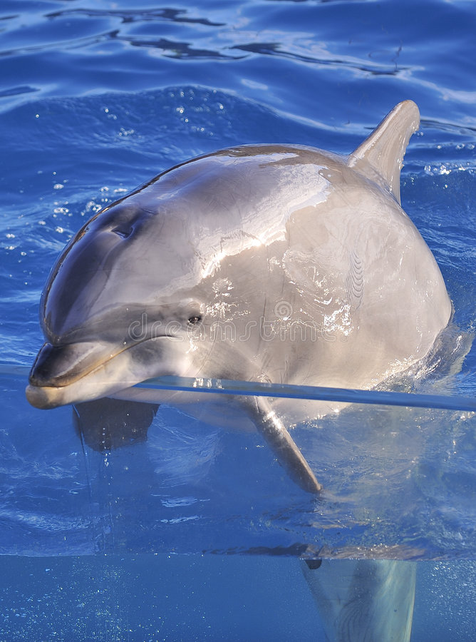 butelkuje delfinu ostrożnie wprowadzać obrazy royalty free