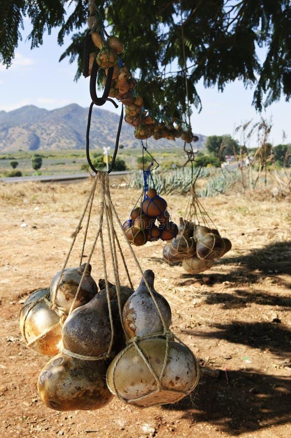 butelkuje kalabasy gurdy Mexico obrazy royalty free