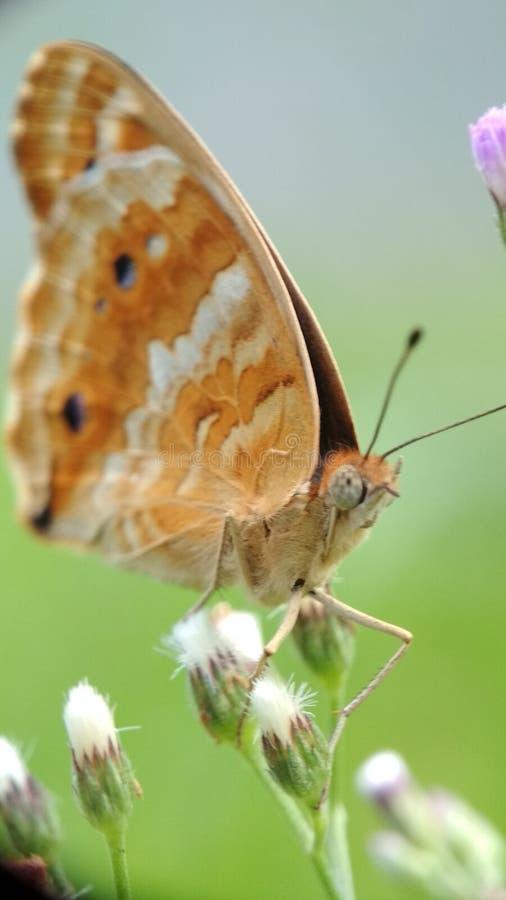 Buterfly стоковые фото