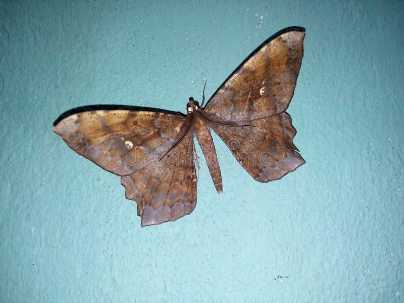 Buterfly image libre de droits