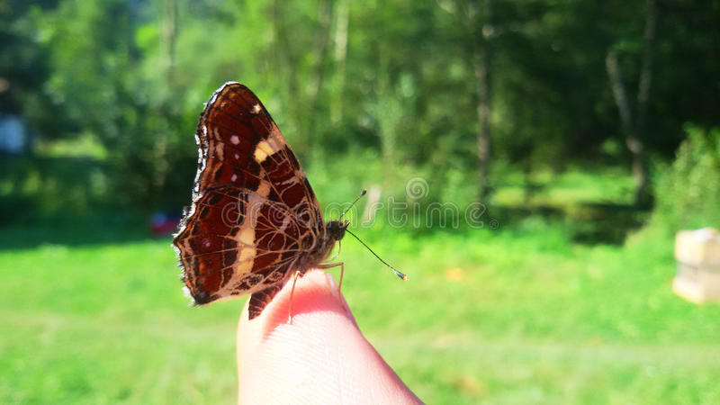 Buterfly auf Finger lizenzfreies stockfoto