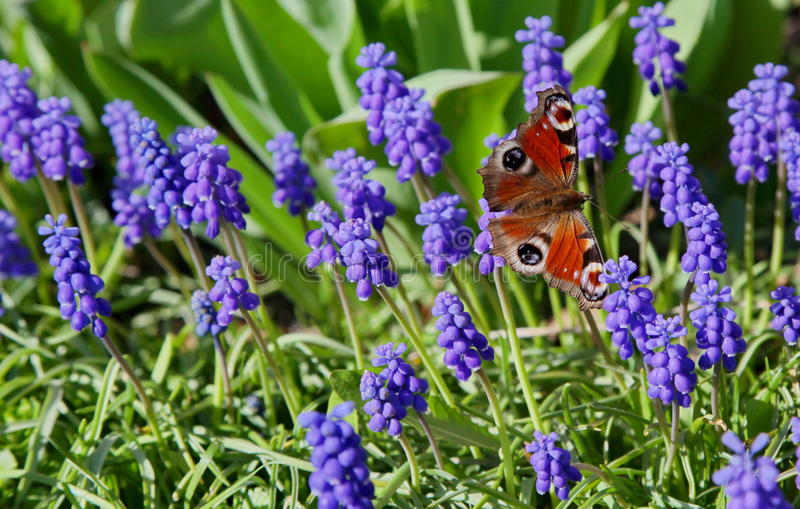 Download Buterfly in garden stock image. Image of flowering, ruzomberok - 27199919