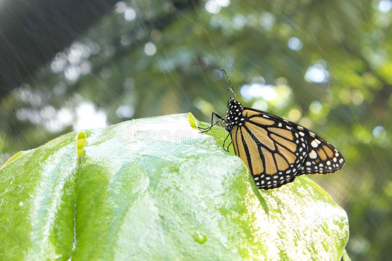 Buterfly under rain royalty free stock images