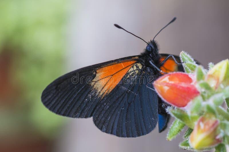 Buterfly und die saftige Blume lizenzfreie stockfotografie