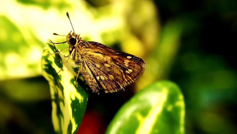 Butherfly zieleni tło obrazy royalty free
