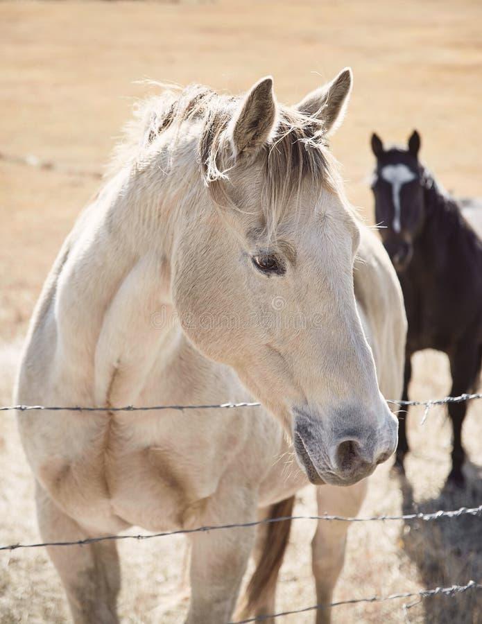 Butte - Paarden_01 royalty-vrije stock afbeeldingen
