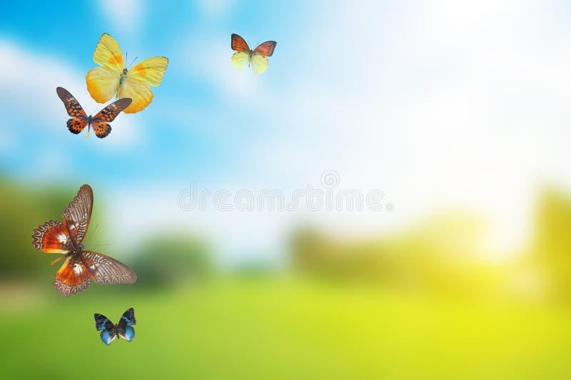 buttefly färgrik fältfjäder arkivfoton