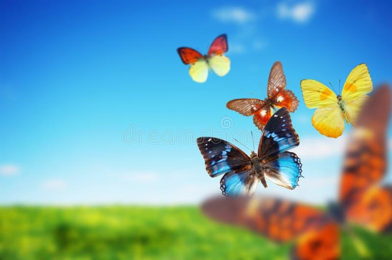 buttefly färgrik fältfjäder royaltyfri bild
