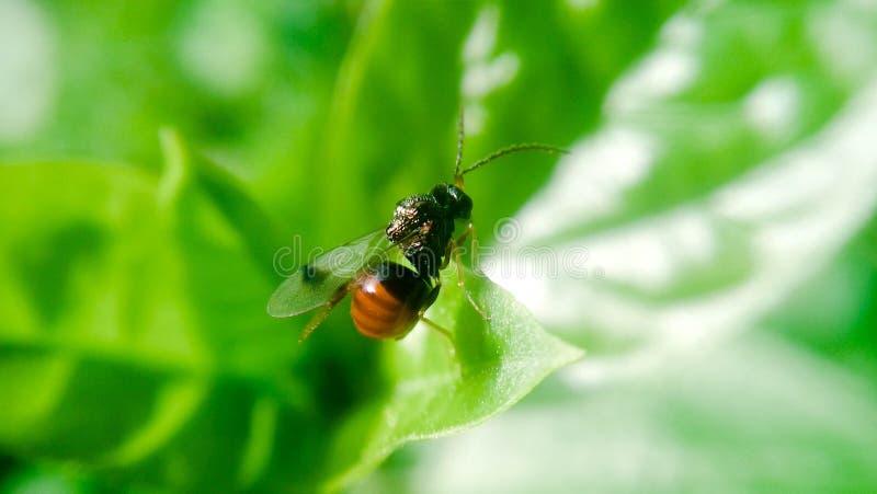 Butteful microfotografi arkivbilder