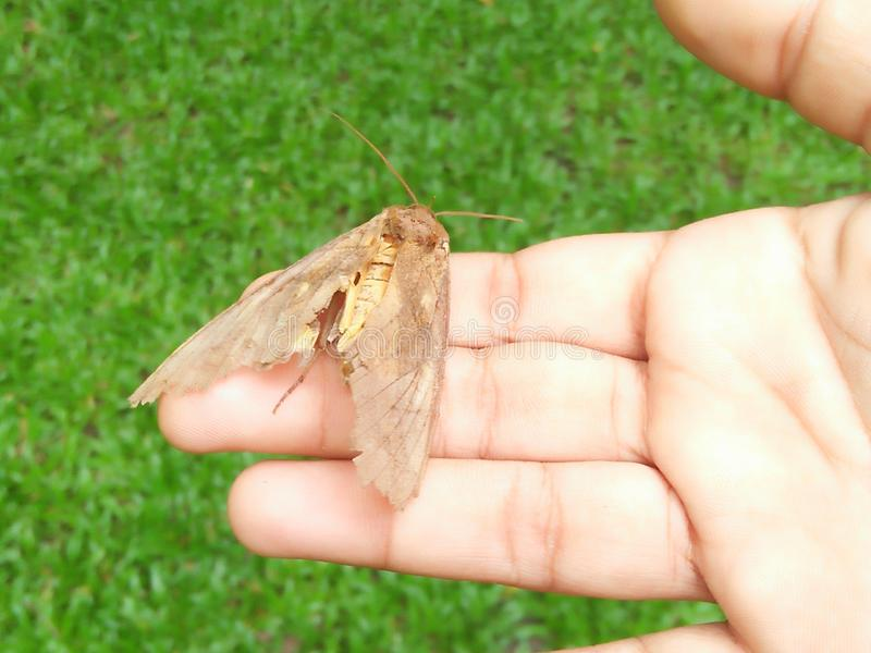 Butter fly on child`s hand royalty free stock photo