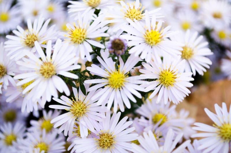 butterblumeen Blüht Wiese Blumen in der Wiese stockfotografie