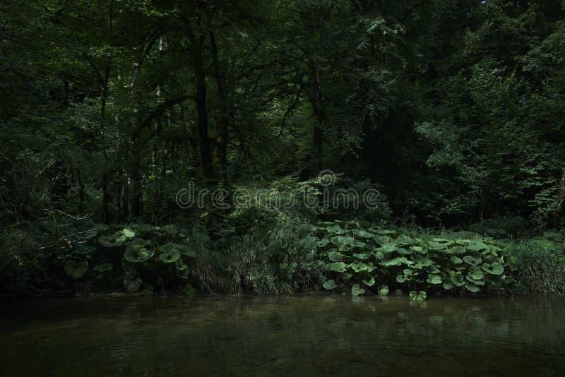 Butterbur för flodkustskog royaltyfria foton