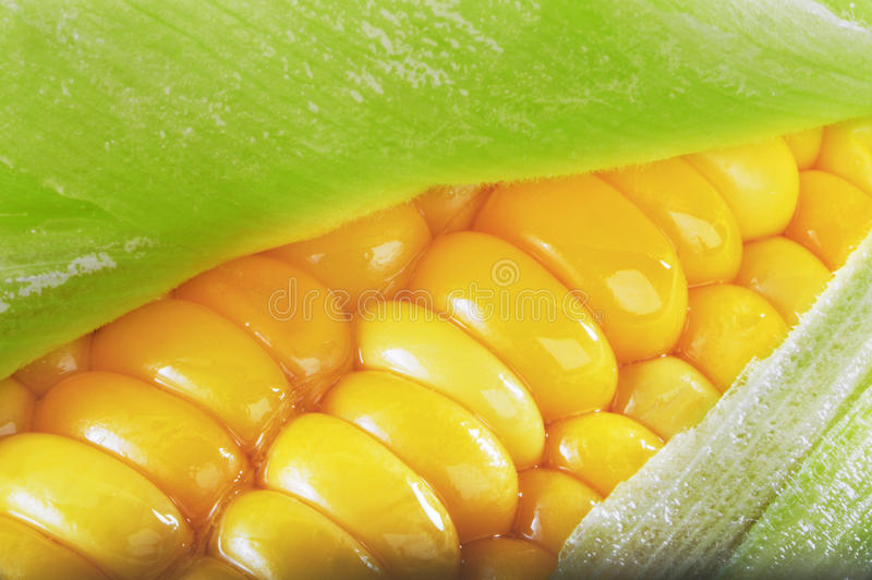 Download Buttered Corn on the Cob stock image. Image of edible - 18947001