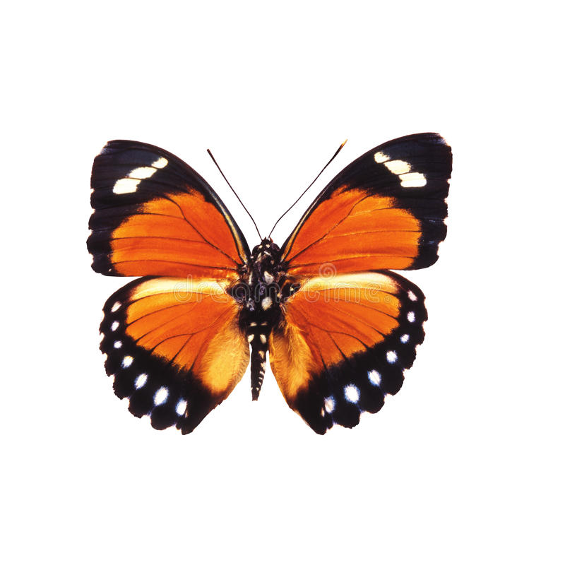 Butterffly isolou-se fotografia de stock
