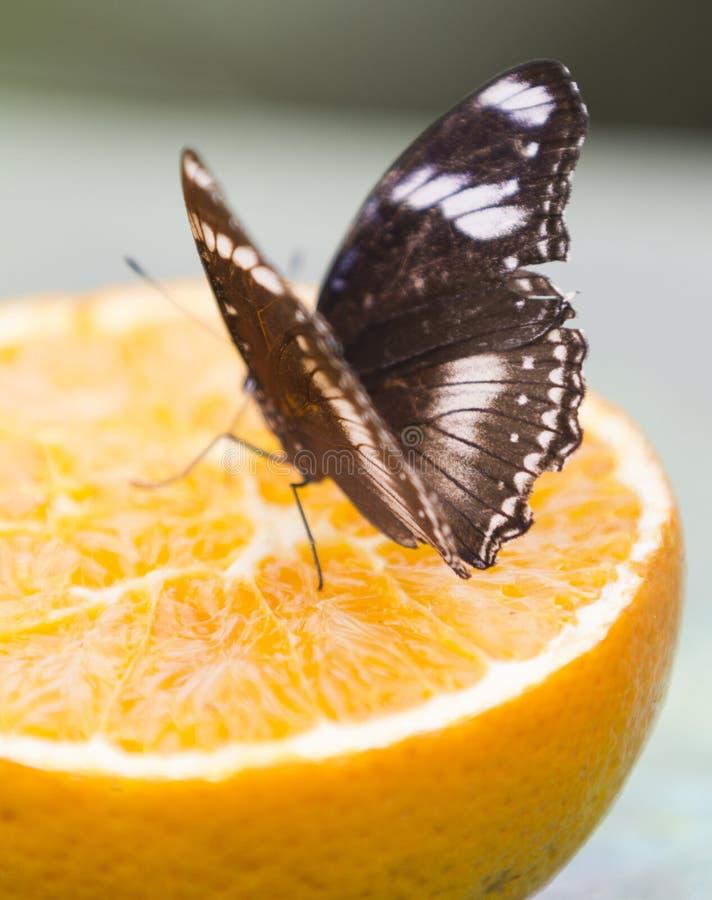 Butterffly på frukt royaltyfri fotografi