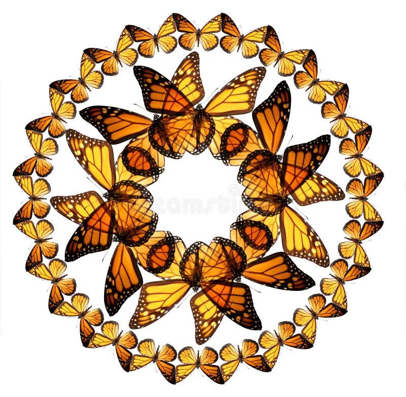 Butterfiles del monarca imagen de archivo