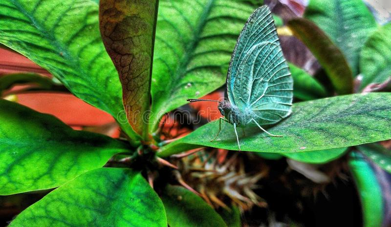 Butterflie στοκ εικόνα με δικαίωμα ελεύθερης χρήσης