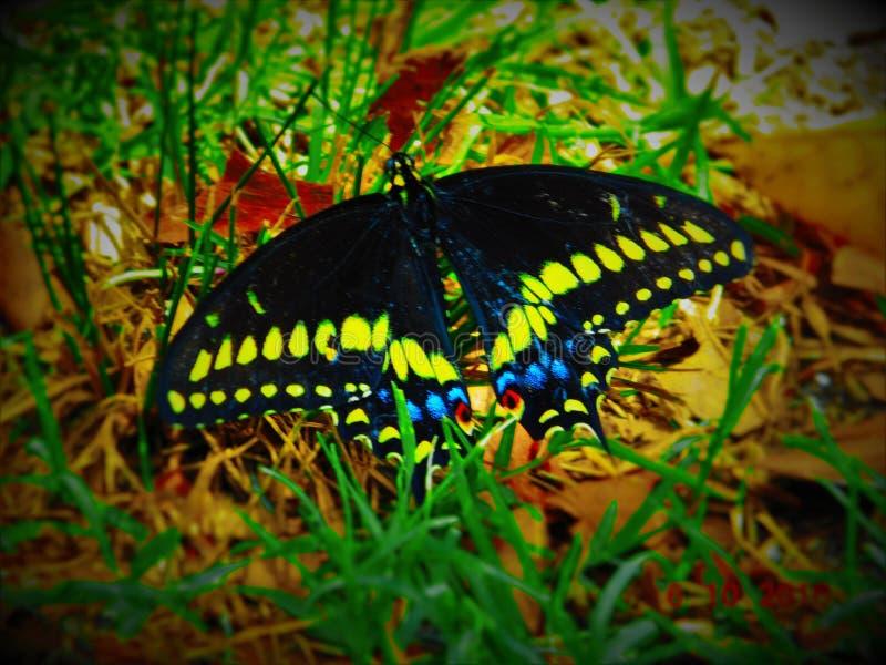 Butterflie bonito foto de stock