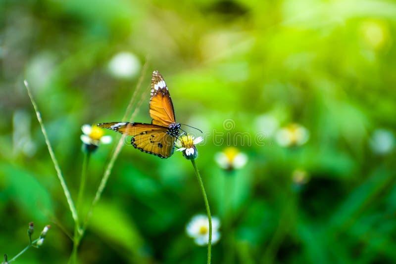 Butterflie com flores e luz do sol na manhã, fundo do borrão fotos de stock royalty free