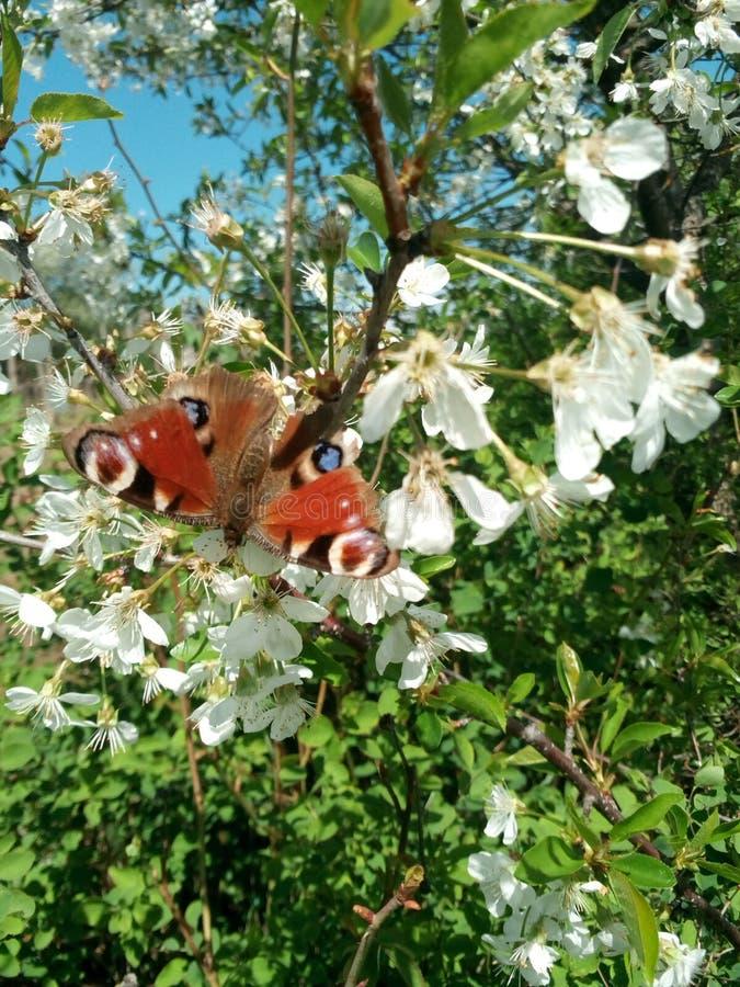 Butterflie imagens de stock