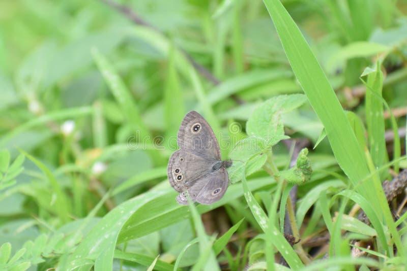Butterfliege stockbild