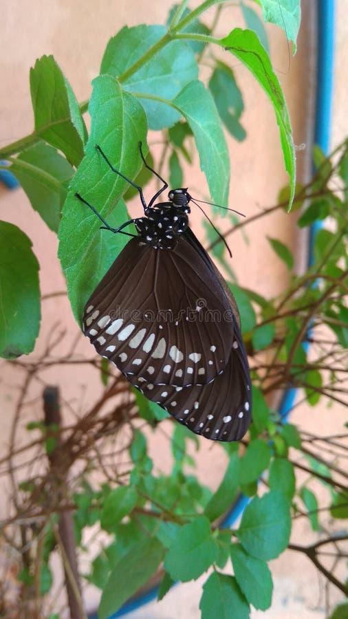 Butterfliege auf Blatt lizenzfreie stockfotos