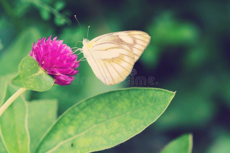 Butterfliege auf Blume stockbilder