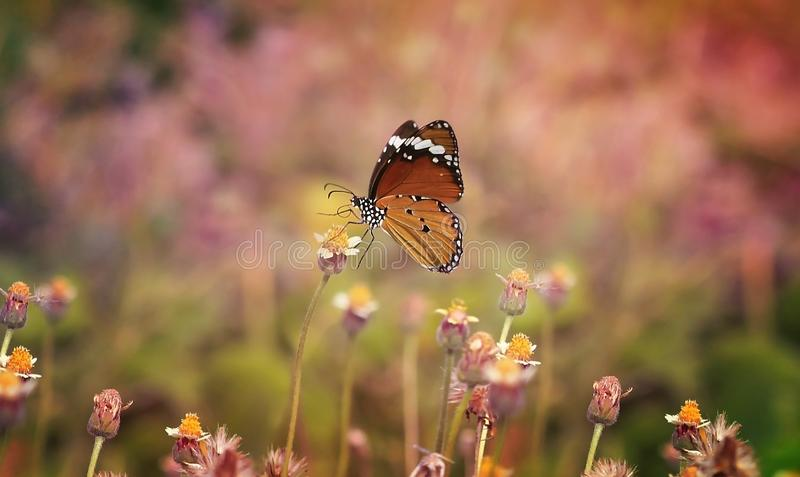 Butterfliegen-Traumblume lizenzfreie stockfotografie