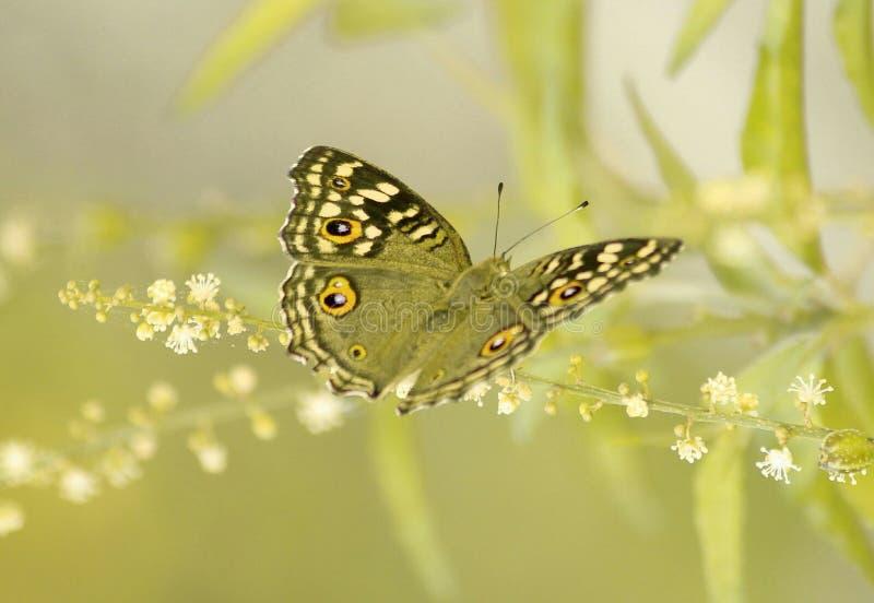 Butterfliegenleben stockbild