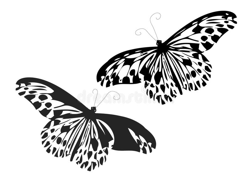 Download Butterflies Stock Image - Image: 14248061