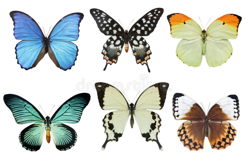 Butterflies. Multicolored butterflies on white background (isolated