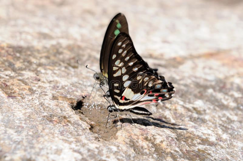 Download Butterflies stock image. Image of nymphalidae, outdoor - 18669729